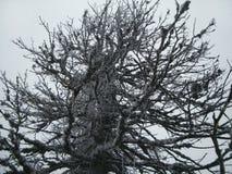 El hielo cubrió el árbol Fotos de archivo