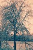 El hielo cubrió el árbol con las ramas quebradas - retras Fotos de archivo