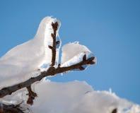 El hielo cubrió la ramificación de árbol con una capa de la nieve Foto de archivo libre de regalías
