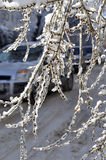 El hielo cubrió ramificaciones Fotos de archivo