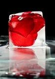 El hielo y se levantó Fotos de archivo libres de regalías