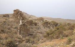 El Hierro, Canary Islands Stock Photography