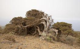 El Hierro, Canary Islands Royalty Free Stock Photos