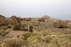 El Hierro, Canary Islands Stock Images