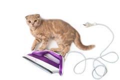 El hierro eléctrico con el gato divertido en él aisló en el fondo blanco Copie el espacio Concepto creativo de la tarjeta del día fotos de archivo libres de regalías
