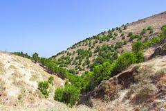 El Hierro. Highlands of El Hierro, Canary Islands stock image