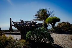 El Hierro wyspa fotografia stock