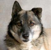 El hocico del perro Foto de archivo libre de regalías