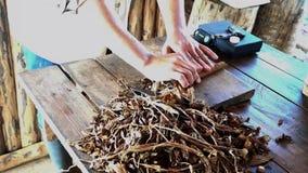 El hombre acaba de hacer el cigarro cubano almacen de video