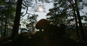 El hombre activo con la mochila grande toma una rotura en el bosque por el mar en la puesta del sol almacen de video