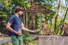 El hombre alimenta las nueces del whith del mono Foto de archivo libre de regalías