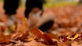 El hombre camina en hojas de otoño en el parque almacen de metraje de vídeo