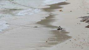 El hombre camina solamente en la playa metrajes
