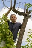 El hombre cortó las ramas secas de un árbol en el Garde Fotografía de archivo libre de regalías