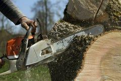 El hombre corta un árbol caido Fotos de archivo
