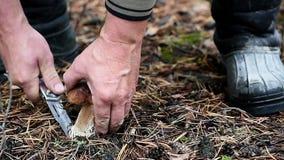 El hombre corta una seta blanca en el bosque almacen de metraje de vídeo