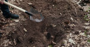 El hombre cubre a Pit With Earth Entierra un animal muerto Sepulcro para el animal Prores, c?mara lenta almacen de metraje de vídeo