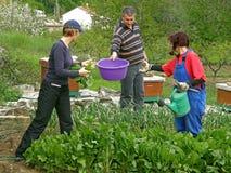 El hombre da a mujeres las cestas para el cardo de la cosecha Fotografía de archivo