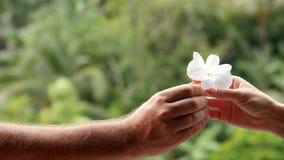 El hombre da a una mujer la flor de la orquídea