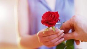 El hombre da a una Rose roja a una mujer Fotos de archivo
