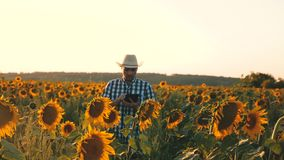 El hombre de negocios con la tableta examina su campo con los girasoles Concepto agrícola del negocio El granjero camina en un fl almacen de metraje de vídeo