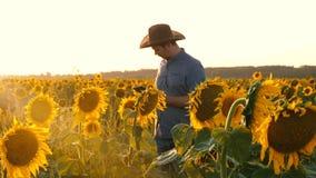 El hombre de negocios con la tableta examina su campo con los girasoles el granjero camina en un campo floreciente hombre del agr metrajes