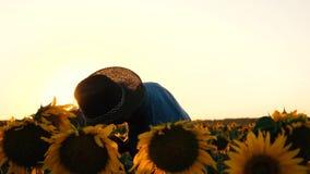 El hombre de negocios con la tableta examina su campo con los girasoles el granjero camina en un campo floreciente hombre del agr almacen de metraje de vídeo