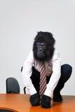 El hombre de negocios del gorila en camisa y lazo se sentó en un escritorio Imagen de archivo
