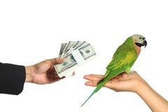 El hombre de negocios dio secretamente el dinero para el pájaro comercial del loro en el fondo blanco, comercio salvaje del pájar foto de archivo libre de regalías