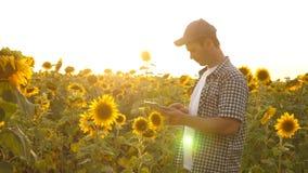 El hombre de negocios en campo analiza su renta cosecha de los estudios del agrónomo de un girasol Un hombre del granjero trabaja metrajes