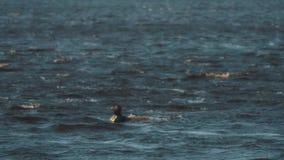 El hombre en chaleco en un esquí del jet falla tentativa de sacar de la persona que practica surf en wakeboard el agua almacen de metraje de vídeo