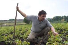 El hombre en el campo de patatas Imagen de archivo libre de regalías