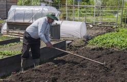El hombre en el país hace los agujeros para plantar las patatas Fotos de archivo