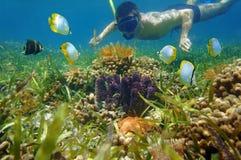 El hombre en submarino del tubo respirador mira vida marina colorida Imagen de archivo libre de regalías