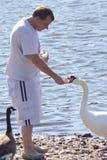 El hombre está alimentando el cisne Fotografía de archivo libre de regalías