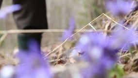El hombre está excavando las flores de la primavera del bosque almacen de metraje de vídeo