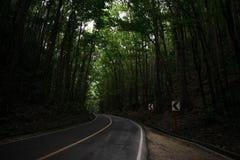El hombre hizo el bosque en Bohol Phlippines Imagen de archivo