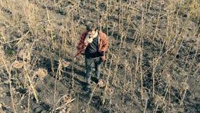 El hombre intenta las semillas de un girasol secado Una persona se coloca en un campo de cultivo, comiendo las semillas almacen de video