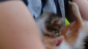 El hombre joven está sosteniendo un pequeño gatito en sus manos almacen de video