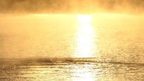El hombre joven nada la mariposa en un lago de oro en la puesta del sol en el slo-MES almacen de metraje de vídeo