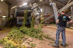 El hombre lleva secuencias de los saltos en la máquina de la cosecha, Bélgica probada fotografía de archivo