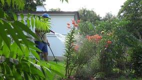 El hombre masculino del florista que riega el lirio anaranjado florece con la herramienta del rociador de la manguera en yarda de metrajes
