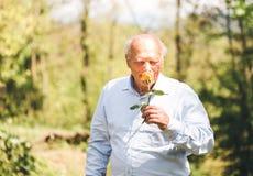 El hombre mayor huele el olor color de rosa imagenes de archivo