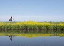 El hombre monta la bicicleta a lo largo del agua de cercano valleikanaal leusden en los Países Bajos y pasa las flores florecient fotografía de archivo