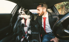 El hombre motiva su perro antes de la competencia canina Imagen de archivo libre de regalías