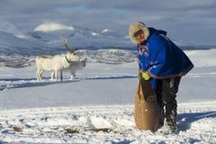 El hombre no identificado de Saami trae la comida a los renos en invierno profundo de la nieve, Tromso, Noruega Imagen de archivo