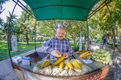 El hombre no identificado vende maíz fresco hervido en Estambul foto de archivo