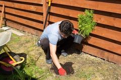 El hombre planta el thuja en un jardín fotos de archivo