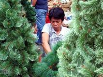 El hombre prepara los árboles de navidad para vender Fotografía de archivo libre de regalías