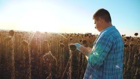 El hombre que el granjero con la tableta en la forma de vida del girasol trabaja el campo va tierra de los paseos del suelo Vídeo almacen de video